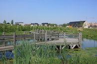 Woonwijk De Lelie