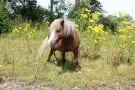 Paarden in de Natuur.