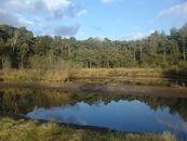 Poel in het natuurgebied Heideveld-Bornebeek