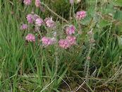 Bloeiende planten in het natuurgebied Heideveld-Bornebeek