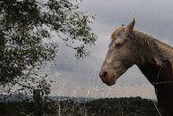 Paard in weide