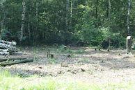 Bomen in het natuurgebied Heideveld-Bornebeek