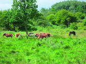 Westhoekreservaat