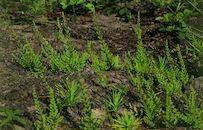 Planten in het natuurgebied Heideveld-Bornebeek