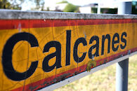Callicanes