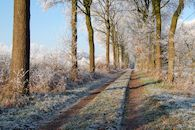 Winterdreef