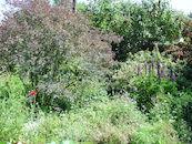 Eco-tuin