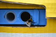 Bijen, hommels en wespen