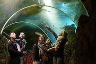 Ocean Tunnel Familie.jpg