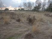 Heidelandschap in natuurgebied Heideveld-Bornebeek.