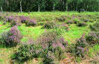 Landschap in het natuurgebied Heideveld-Bornebeek