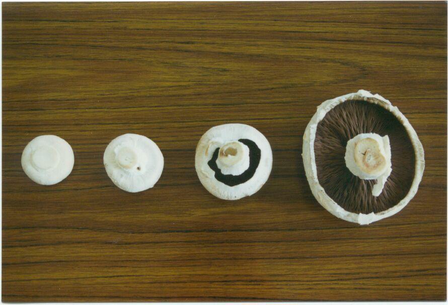 Afrijping van een champignon