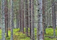 Mos in het bos.