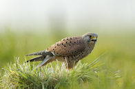 Vogels van het Zwin