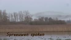 Spreeuwenvlucht boven De Blankaart.