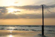 Aalscholver aan zee