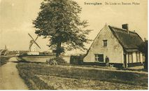 Oude linde